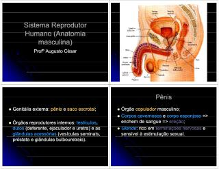 Aula de Sistema Reprodutor Humano (Anatomia masculina).pdf