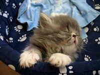 gato.flv